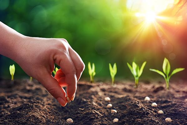 Les nouvelles récoltes de graines…